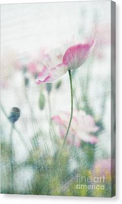 suffused with light III Canvas Print