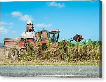 Sugar Cane Being Harvested, Lower Canvas Print by Panoramic Images