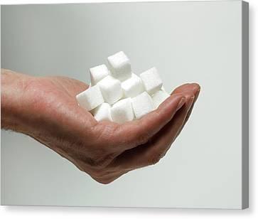 Sugar Consumption Canvas Print