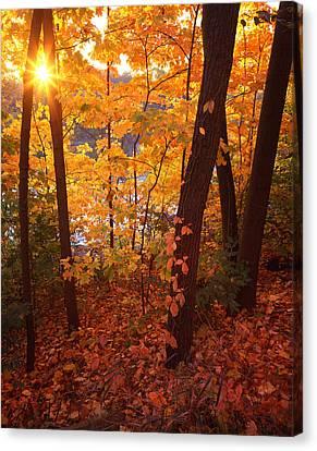 Sugar Maple Sunrise Canvas Print by Ray Mathis