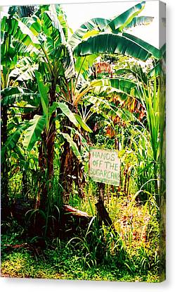 Sugarcane Canvas Print