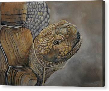 Sulcata Canvas Print by Jean Cormier