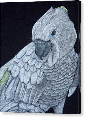 Sulpher-crested Cockatoo Canvas Print