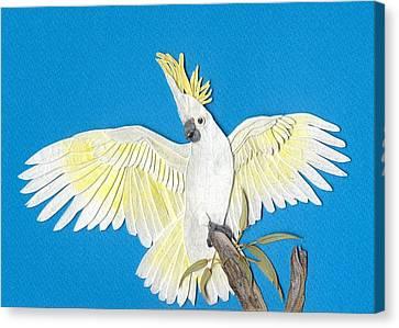 Sulphur Crested Cockatoo Canvas Print