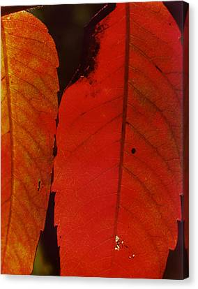 Sumac Leaves.jpg Canvas Print