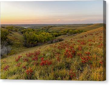Canvas Print featuring the photograph Sumac by Scott Bean