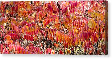 Sumac Canvas Print by Steven Ralser