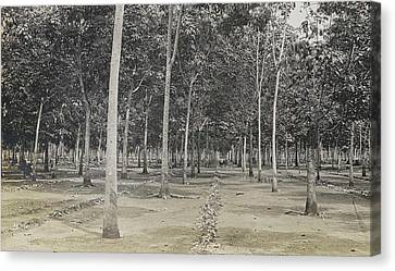 Plantations Canvas Print - Sumatra Indonesia, The Cleaning Of The Rubber Plantation by Artokoloro