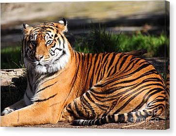 Sumatran Tiger 5d27142 Canvas Print by Wingsdomain Art and Photography