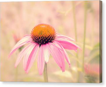 Cone Flower Canvas Print - Summer Always Comes Anyway by Bob Orsillo