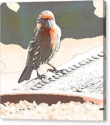 Summer Bird Canvas Print by Artist and Photographer Laura Wrede