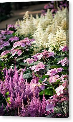 Summer Border Canvas Print