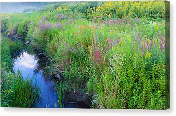 Summer Bouquet Canvas Print by Bill Wakeley