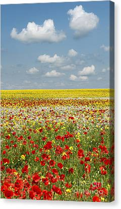 Summer Colours Canvas Print by Tim Gainey