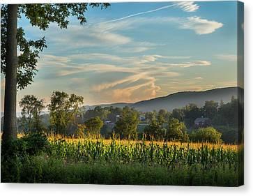 Summer Corn Canvas Print by Bill Wakeley