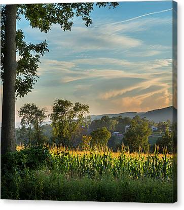 Litchfield County Canvas Print - Summer Corn Square by Bill Wakeley