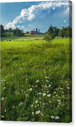 Summer Days Canvas Print by Bill Wakeley