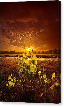 Summer Dreams Drifting Away Canvas Print by Phil Koch