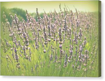Canvas Print featuring the photograph Summer Dreams by Lynn Sprowl