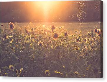 Sunflower Canvas Print - Summer Evening by Chris Fletcher