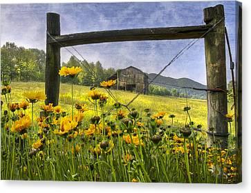 Summer Fields Canvas Print by Debra and Dave Vanderlaan