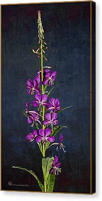 Summer Fireweed Canvas Print