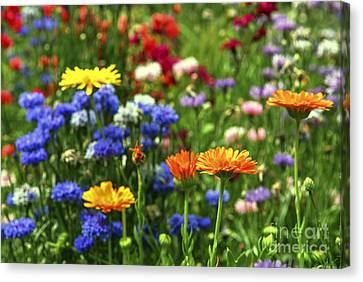 Lush Colors Canvas Print - Summer Flowers by Elena Elisseeva
