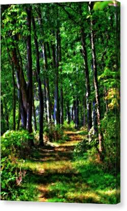 Summer Forest In Ohio Canvas Print by Dan Sproul
