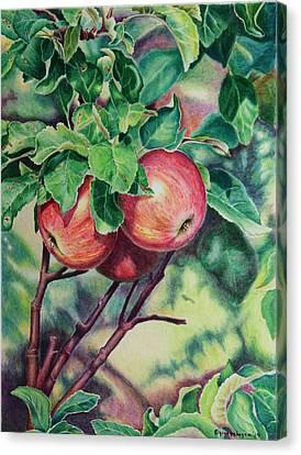 summer Fruit Canvas Print by Gina Gahagan