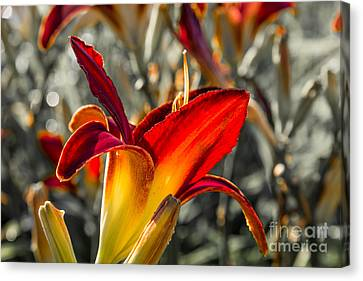 Summer Garden 2 Canvas Print by Susan Cole Kelly Impressions