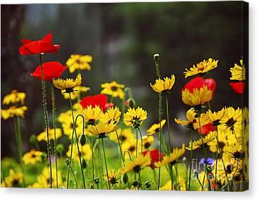 Flowering Canvas Print - Summer Garden by Elena Elisseeva