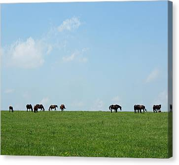 Summer Grazing Canvas Print by Roger Potts