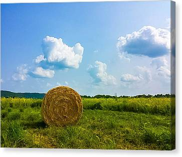 Summer Harvest Canvas Print by Martha Cordero
