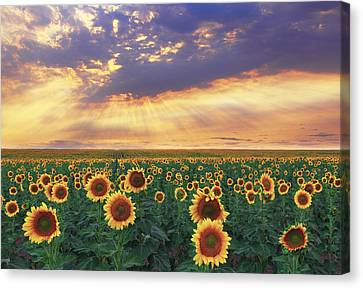 Canvas Print featuring the photograph Summer Haze by Kadek Susanto