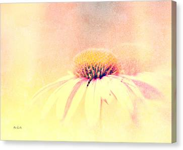 Cone Flower Canvas Print - Summer In A Day by Bob Orsillo