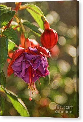 Summer Jewels Canvas Print by Peggy Hughes