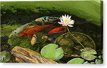 Summer Koi And Lilly Canvas Print