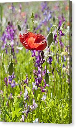 Canvas Print featuring the photograph Summer by Lana Enderle