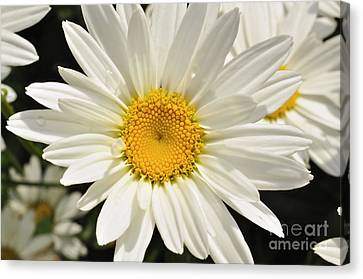 Summer Love Canvas Print by Sandy Molinaro