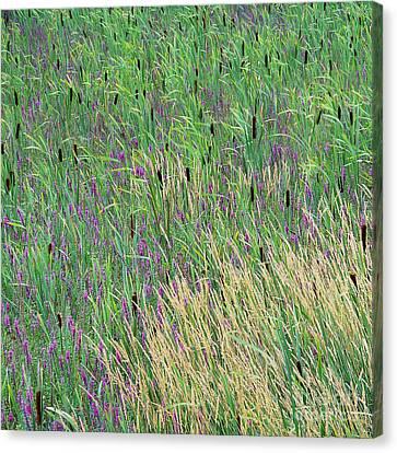 Summer Marsh Canvas Print by Alan L Graham