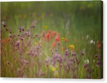 Canvas Print featuring the photograph Summer Meadow by Ellen Heaverlo