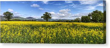 Summer Meadow Canvas Print by Ian Mitchell
