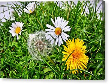 Flowerrs Canvas Print - Summer Meadow by Manfred Lutzius