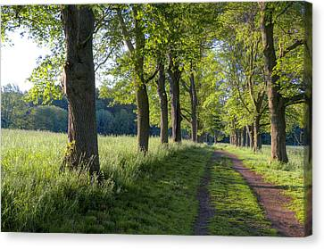 Summer Morning Canvas Print by David Stone