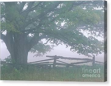 Summer Morning Fog Canvas Print by Alan L Graham