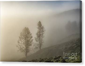 Summer Morning In Yellowstone Canvas Print by Sandra Bronstein