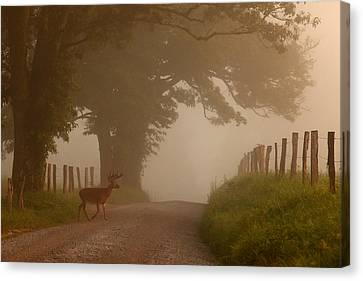 Gatlinburg Tennessee Canvas Print - Summer Morning Stroll by Yoder Images
