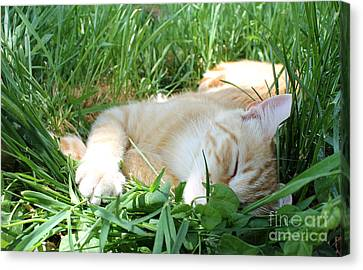 Summer Napping Canvas Print by Michelle Wolff
