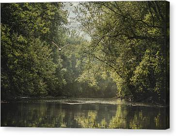 Eagle In Flight Canvas Print - Summer On The River - Landscape - Trees by SharaLee Art