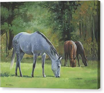 Summer Pasture Canvas Print by Alecia Underhill